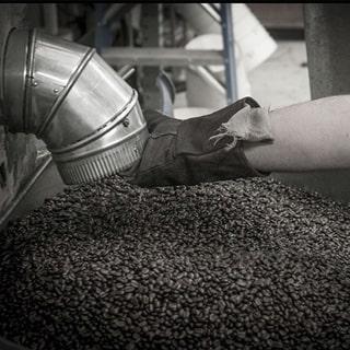 Rang cà phê arabica